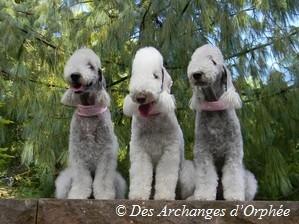Orphée, Tsarine et Olga.