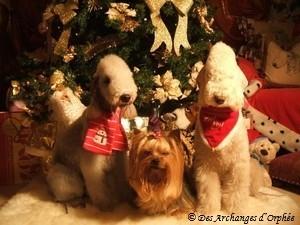 ♥ Orphée, Agathe et Tsarine préparent Noël 2011
