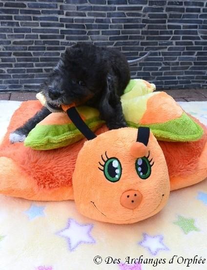 Jaslane avec le cadeau Pillow pet de Karine !