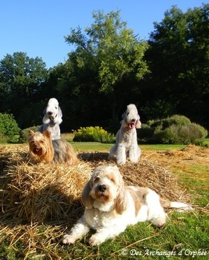 Olga, Agathe, Orphée et Elliot, notre meute ♥ - Août 2011.