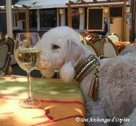 Tsarine apprécie le vin de Sarre.