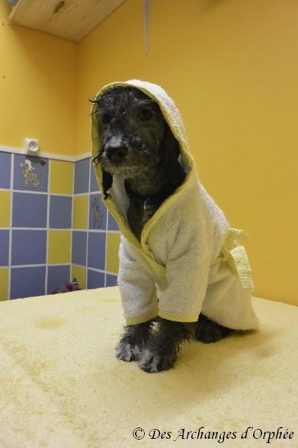 Le bain...j'aime pas !