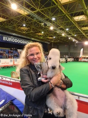 Eurodogshow Courtrai (Belgique) -1er Very good.