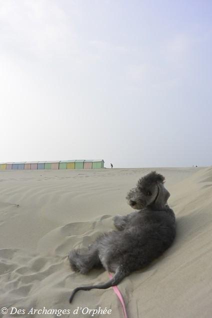 Jaslane découvre la plage, le sable, la mer et les mouettes !