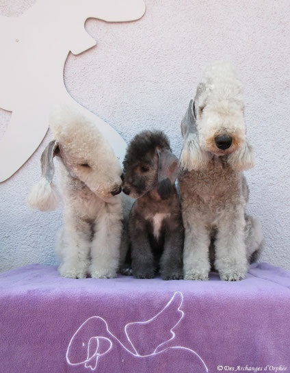 Jaslane, R'mione et Olga.