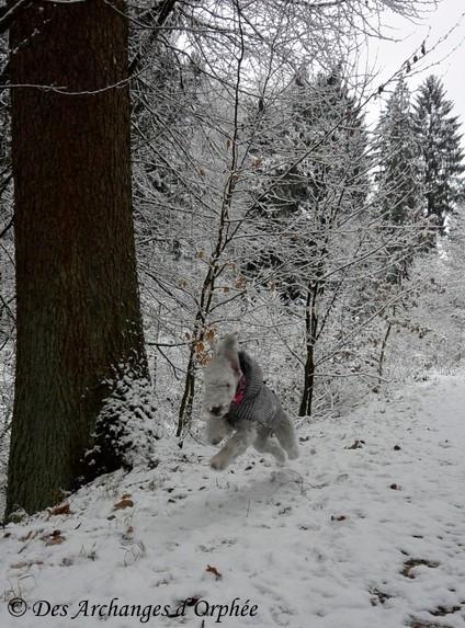 Jaslane en promenade dans la forêt