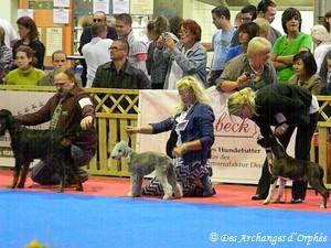Dans le ring d'honneur du Luxembourg pour choisir le Best Puppy of day.