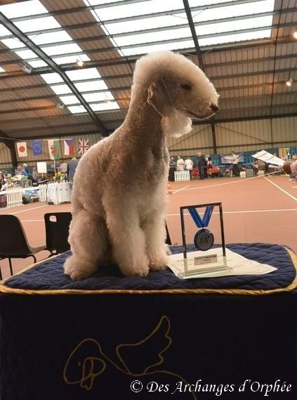 Tsarine remporte le trophée Prestige du club français des terriers !