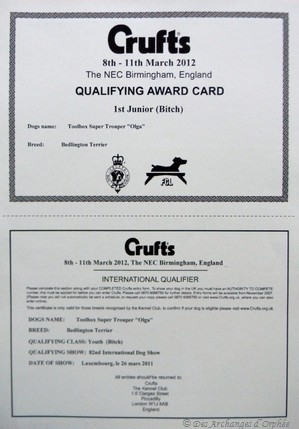 Obtention du qualificatif pour la Crufts 2012.