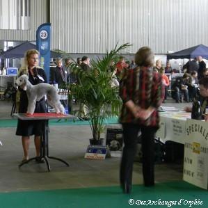 Olga CAC-CACIB jugée par Mme Jacqui Hurley (GB).