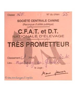 Ch. de France en classe Novice - Très Prometteur jugé par M. Gacon Marc.
