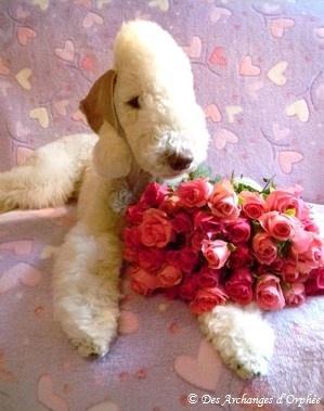 ♥ Tsarine 11 mois ♥
