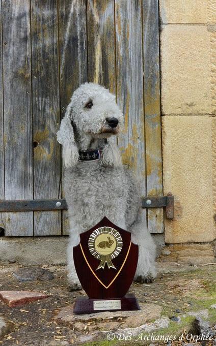 Olga parmi les 2 derniers terriers du CFAT-DT qualifiés pour la finale.