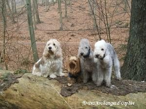 Elliot, Agathe, Orphée et Olga en balade.