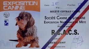 Tsarine obtient la R.CACS.