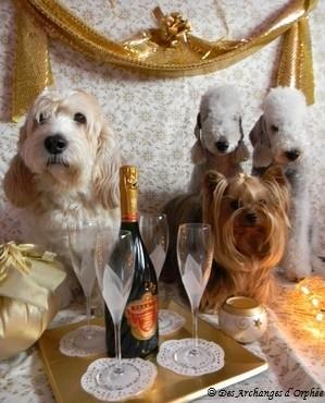 ♥Elliot ♥, ♥Agathe♥, ♥Orphée♥ et ♥Olga♥ vous souhaitent une bonne et heureuse année !