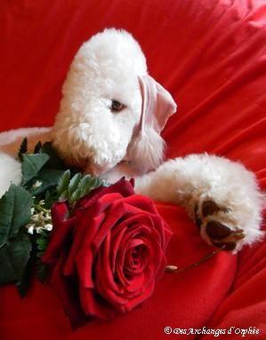 ♥ Tsarine Saint-Valentin ♥