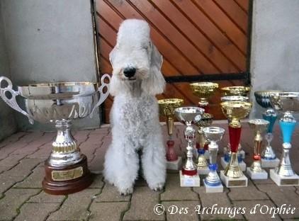 Réconpenses des podiums pour sa seconde année de concours.