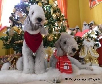 Les Bedlingtonettes de Noël ♥ ♥