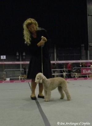 Tsarine dans le ring du jugement.