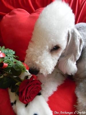 ♥ Olga ♥ 11 mois le jour de la Saint -Valentin.