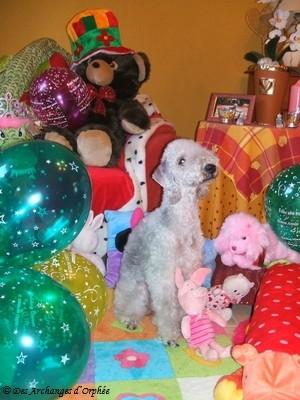 Orphée fête son 1er anniversaire.
