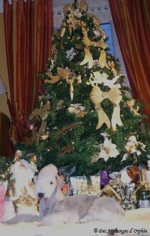 ♥ Orphée garde le sapin de Noël.