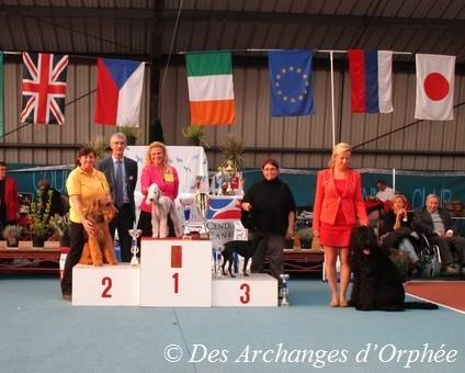 Jaslane DES ARCHANGES D'ORPHEE, best in show Junior / meilleur jeune de l'exposition.