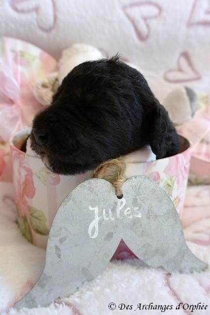 Jules 12 jours