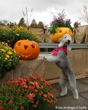 Olga fête Halloween !