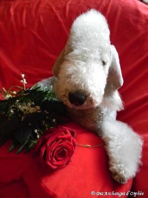 ♥ Olga Saint-Valentin ♥