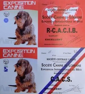 Tsarine - Meilleure femelle en classe Intermédiaire, CACS et R.CACIB !