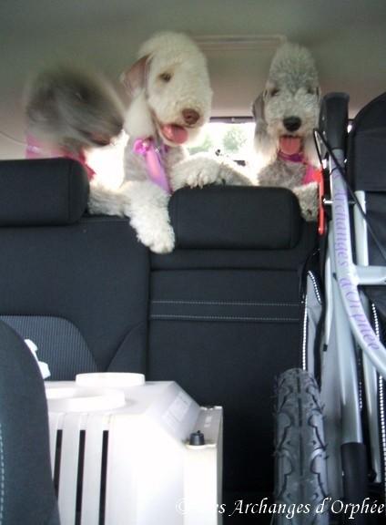 Dans la voiture, en route pour la maison