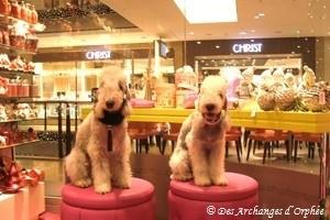 Pink shopping !