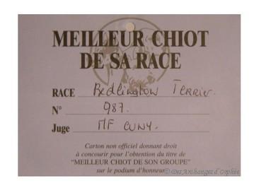 Meilleur Puppy de la race à l'Internationale de Metz jugé par mme M.F. Cuny.