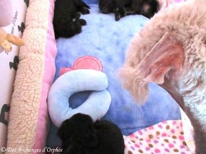 Tatie Tsarine est impatiente de pouvoir jouer avec les bébés