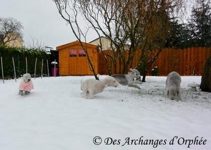 Cliquez sur le lien pour voir les photos de Jaslane dans la neige !