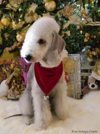 Premier Noël d'Olga ♥