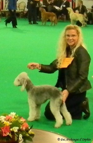 Best Puppy de la race - Ring d'honneur Eurodogshow Courtrai (Belgique).