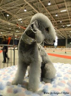 Olga au Dog show de Metz 7 mois1/2.
