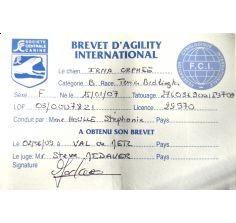 """Orphée obtient le """"Brevet d'agility international"""" de la FCI moins de 3 mois après ses débuts en compétition."""
