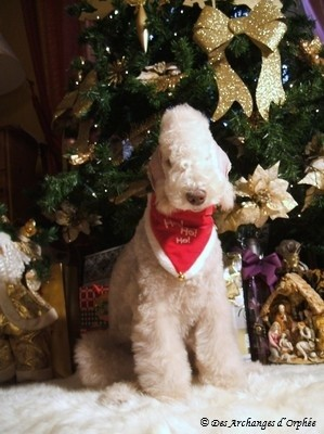 ♥ Tsarine sous son premier sapin de Noël.