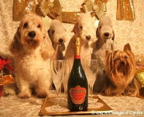 Bonne Année 2012 ♥♥♥♥♥