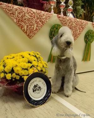 Olga et son trophée de Championne Jeune du Club des Terriers allemand (KfT).