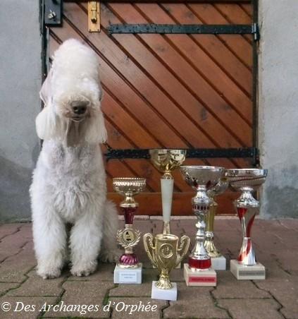 Les réconpenses de podium pour sa première année !