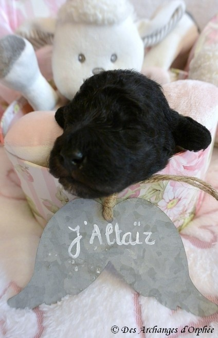 J'Altaïr 12 jours