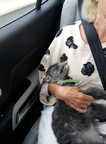 Dans la voiture jusqu'à Nantes dans les bras rassurants de maman Dominique