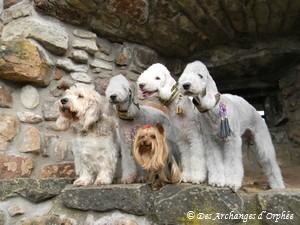 Elliot, Orphée, Agathe, Tsarine et Olga.