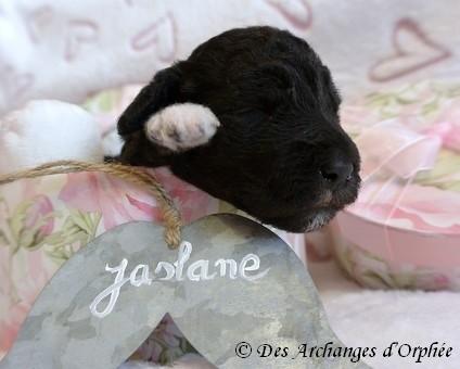 Jaslane 12 jours