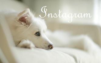 Osaji*Instagram